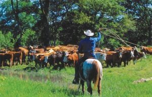 Stony Creek Ranch Resort Cattle Drive