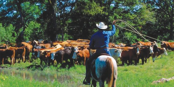 Stony Creek Ranch Resort Cattle Drive