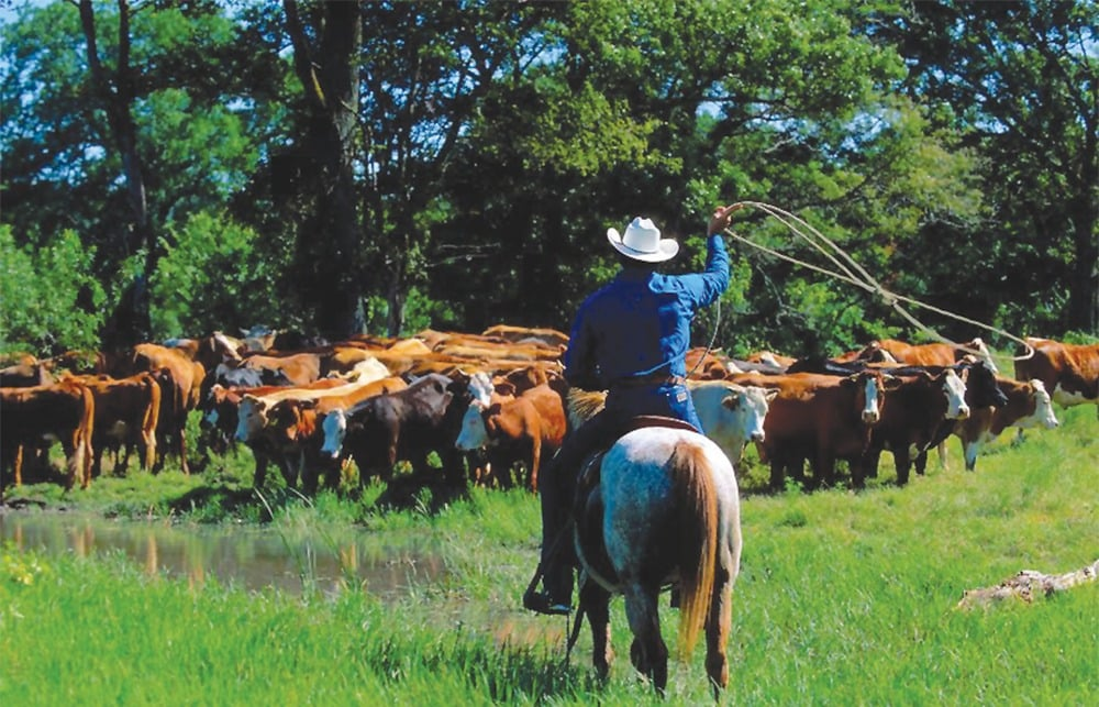 Stony creek ranch resort cattle drive adirondack for Resorts driving distance from nyc