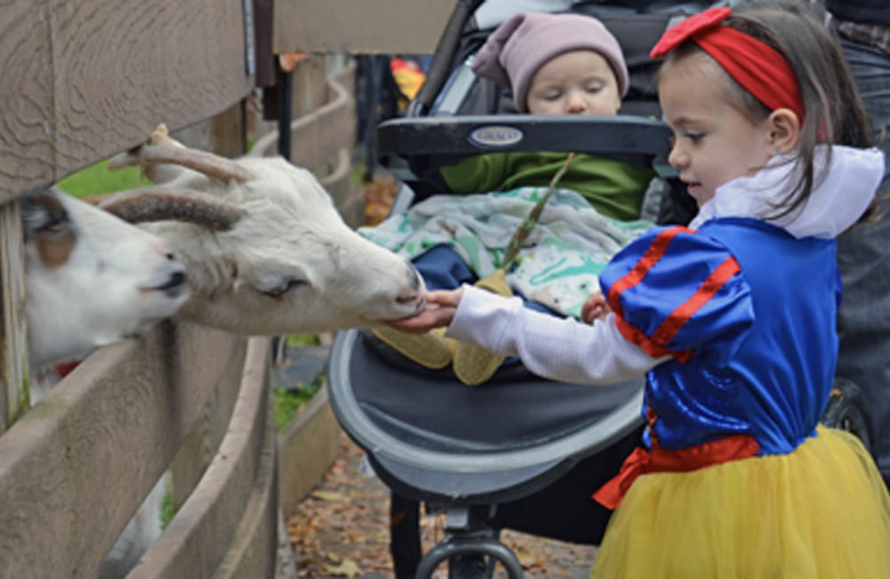 Feed the animals at Spooktacular at Utica Zoo. | Photo from Utica Zoo