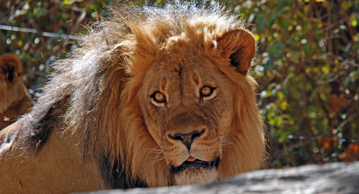 Bronx Zoo | Lisa Ballard
