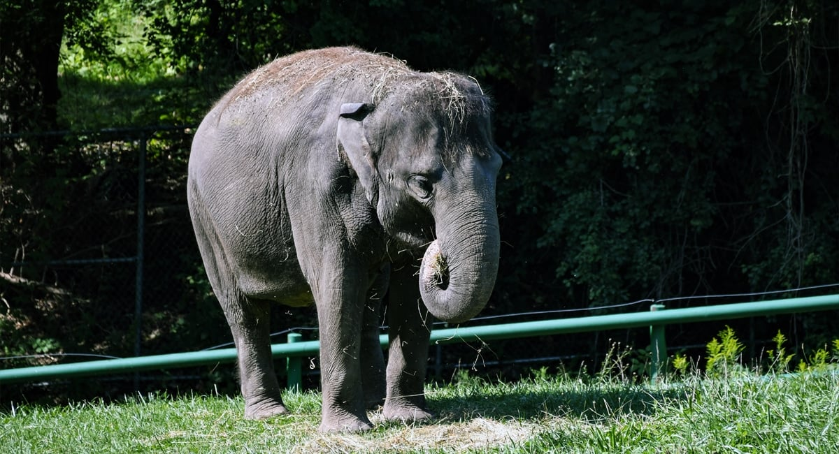 Rosamond Gifford Zoo | Lisa Ballard