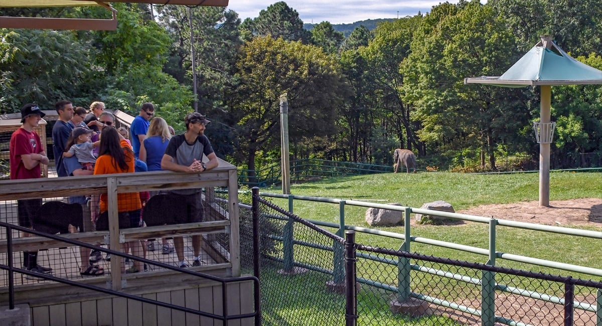 wild things exploring new york state zoos new york by rail