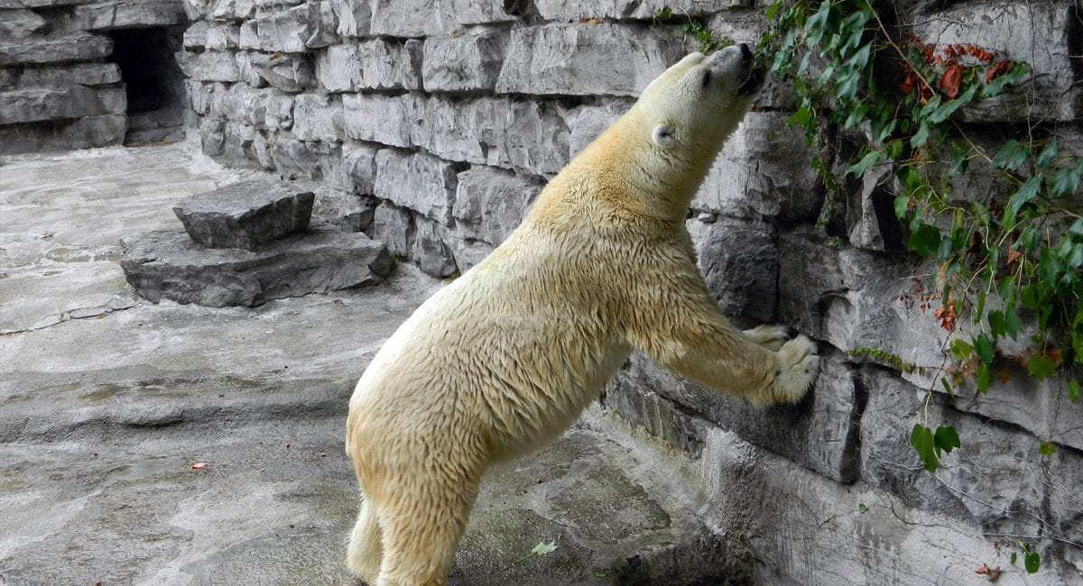 Buffalo Zoo   The Lord of the Allosaurs   Wikipedia