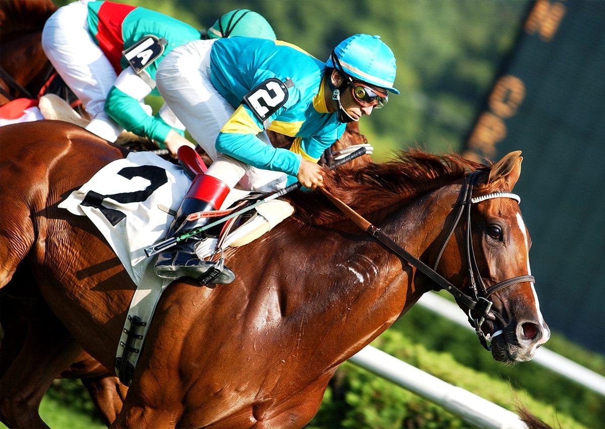 Horses, History, and Health