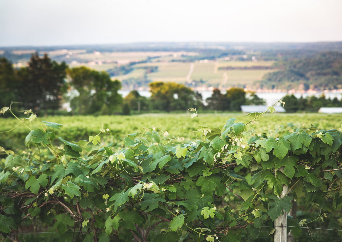 Wine Country | Ithaca, NY | Finger Lakes