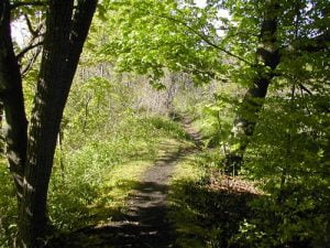 Devil's Hole State Park Gorge Trail