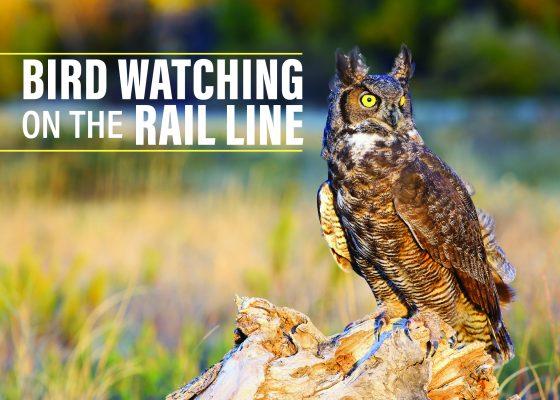Birding Blog Header