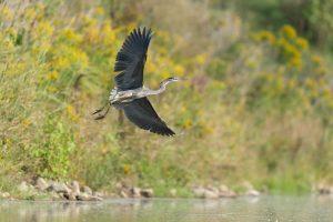 Eagle Watching at Lake Onondaga