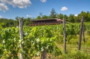Robibero Family Vineyards