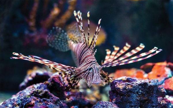 VIA Aquarium Schenectady