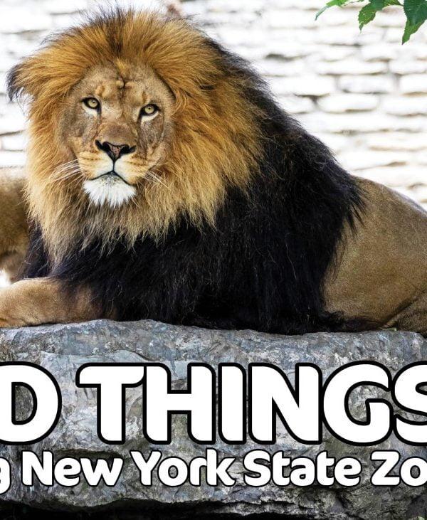 NYS Zoos header