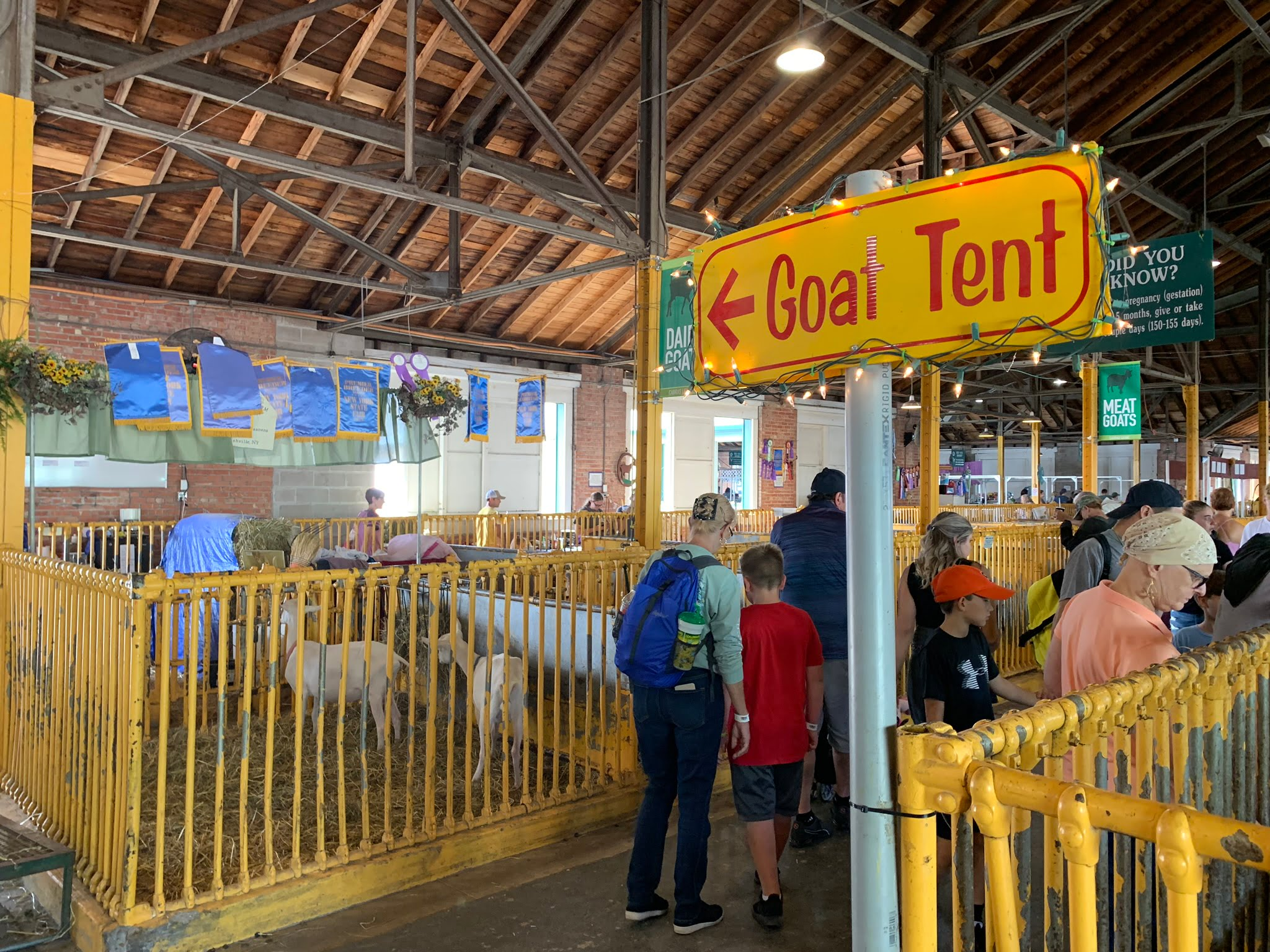Goat Tent at NY State Fair