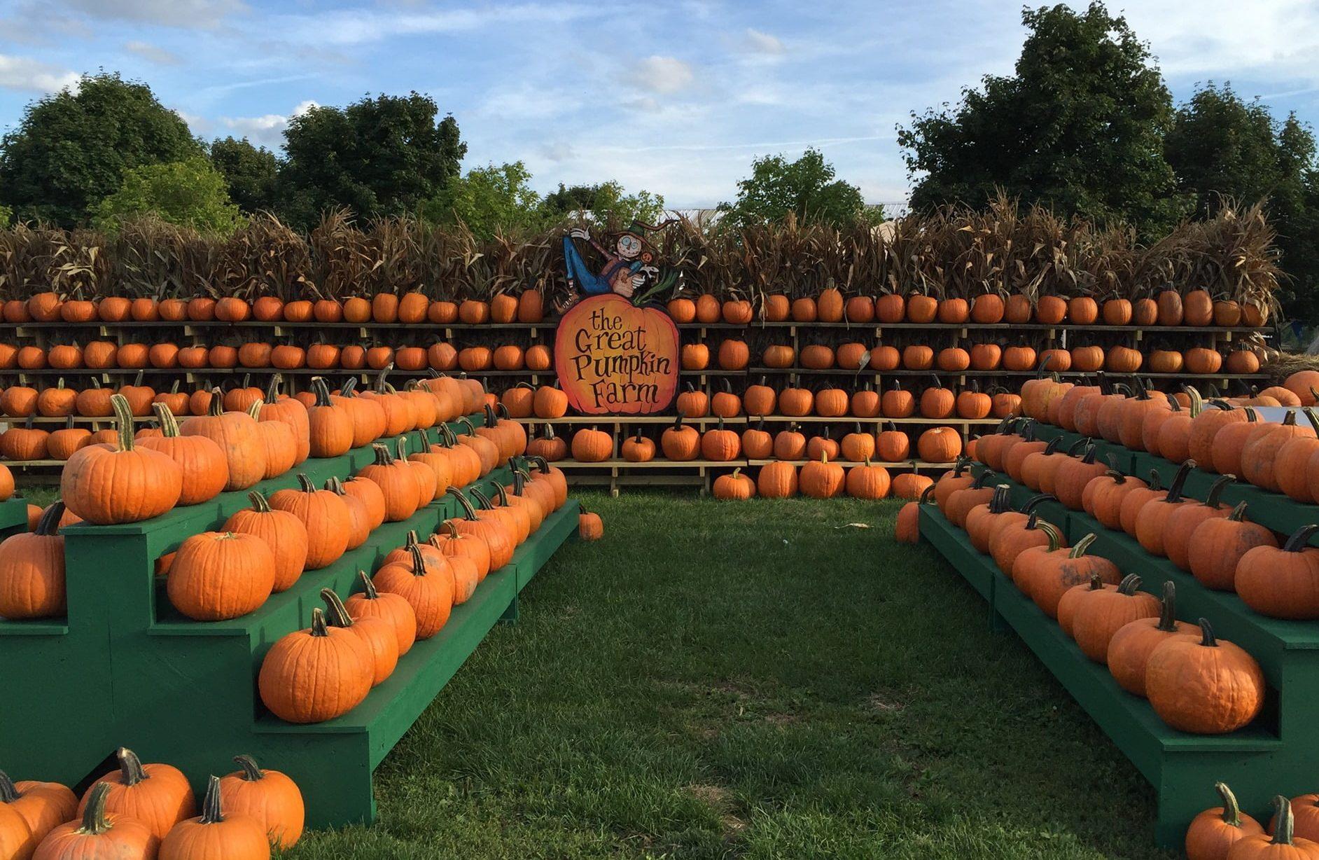 Great Pumpkin Farm